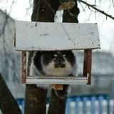 weird looking squirrel