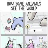 animals and stuff