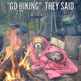 Dogger likes Hiking?